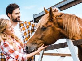 Lächelnde Reiterin mit ihrem Freund streicheln ein Haflinger Pferd