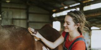 Mädchen putzt ein braunes Pferd