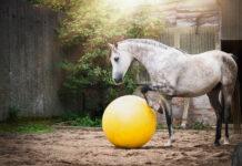 Graues Pferd mit Ball auf dem Sandplatz