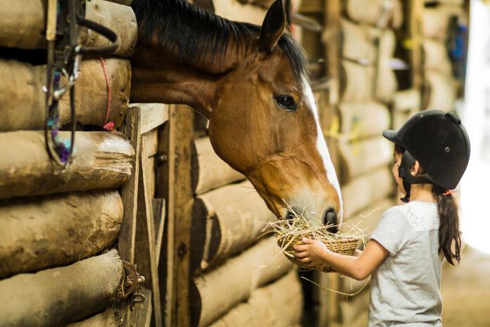 Mädchen füttert Pferd