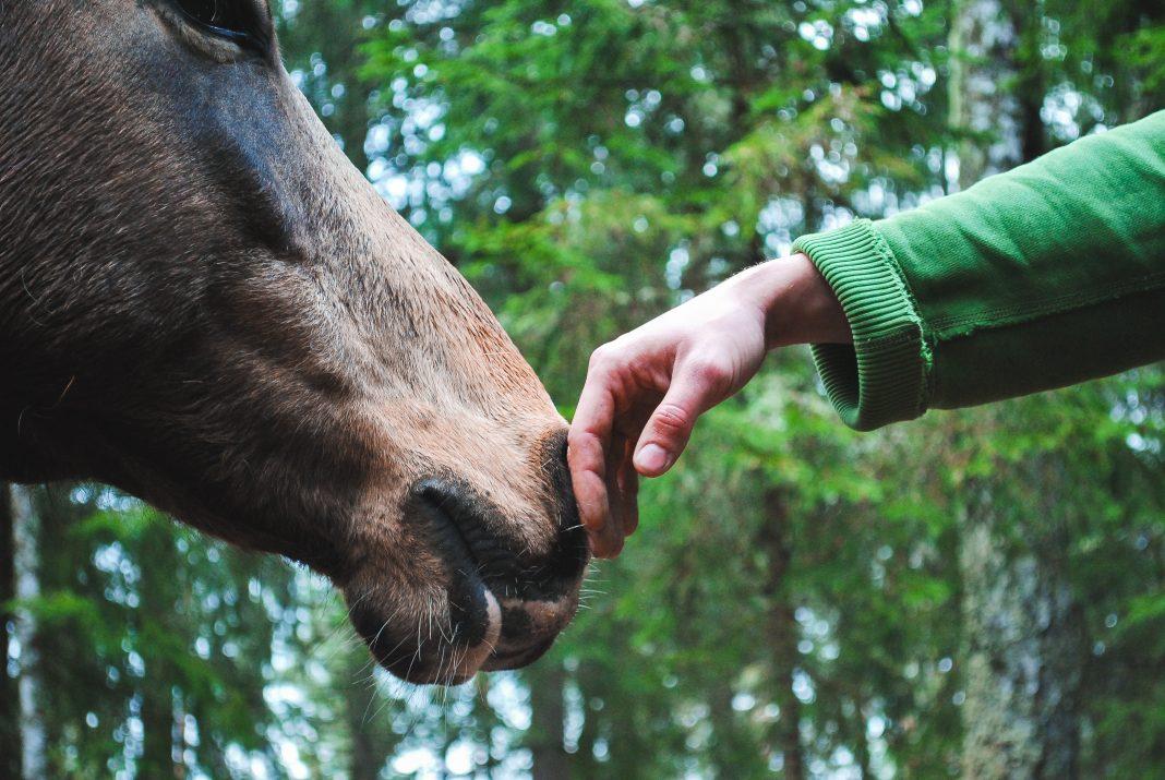 Horsemanship