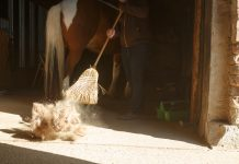 Fellwechsel Pferd Stall fegen