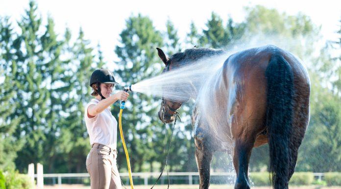 Pferde waschen und abspritzen