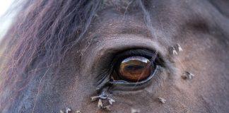 Fliegenschutz Pferd