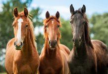Fellfarben Pferde