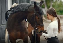 Kosten Pferdeversicherung