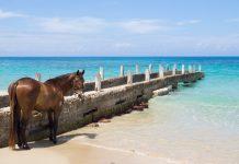 Pferd bei Hitze am Strand