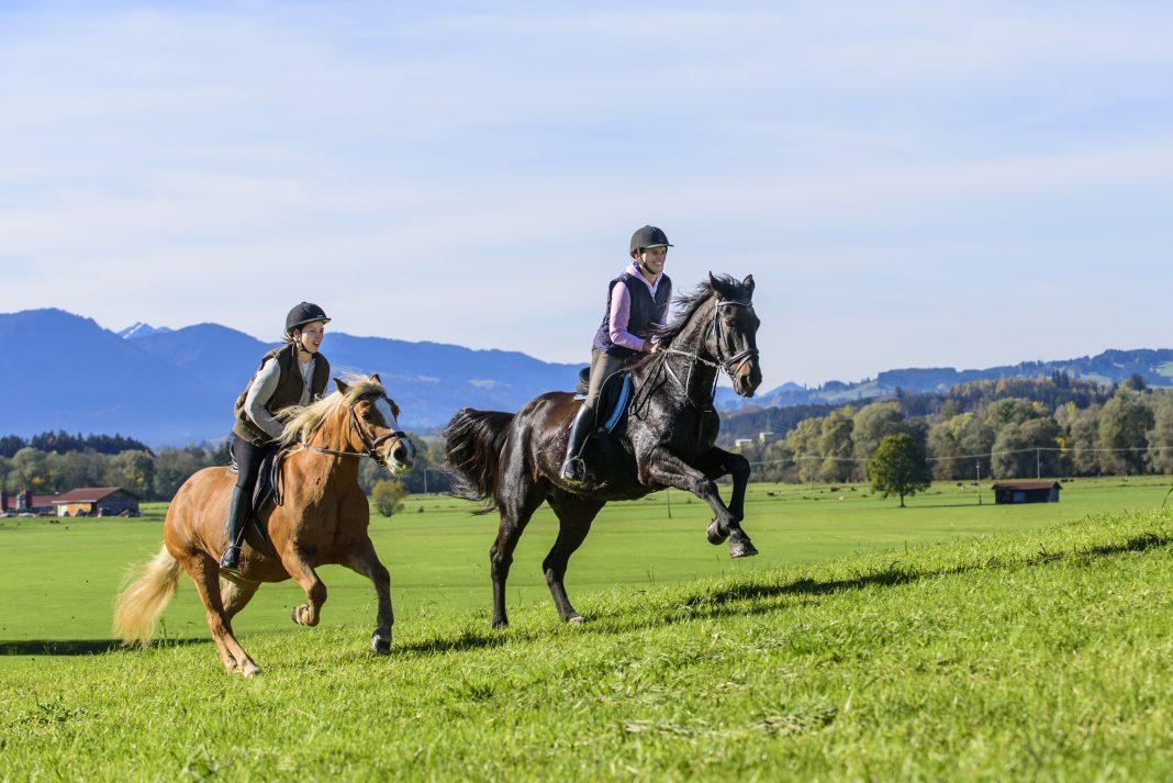 Zwei gute Reiter und ihre Pferde