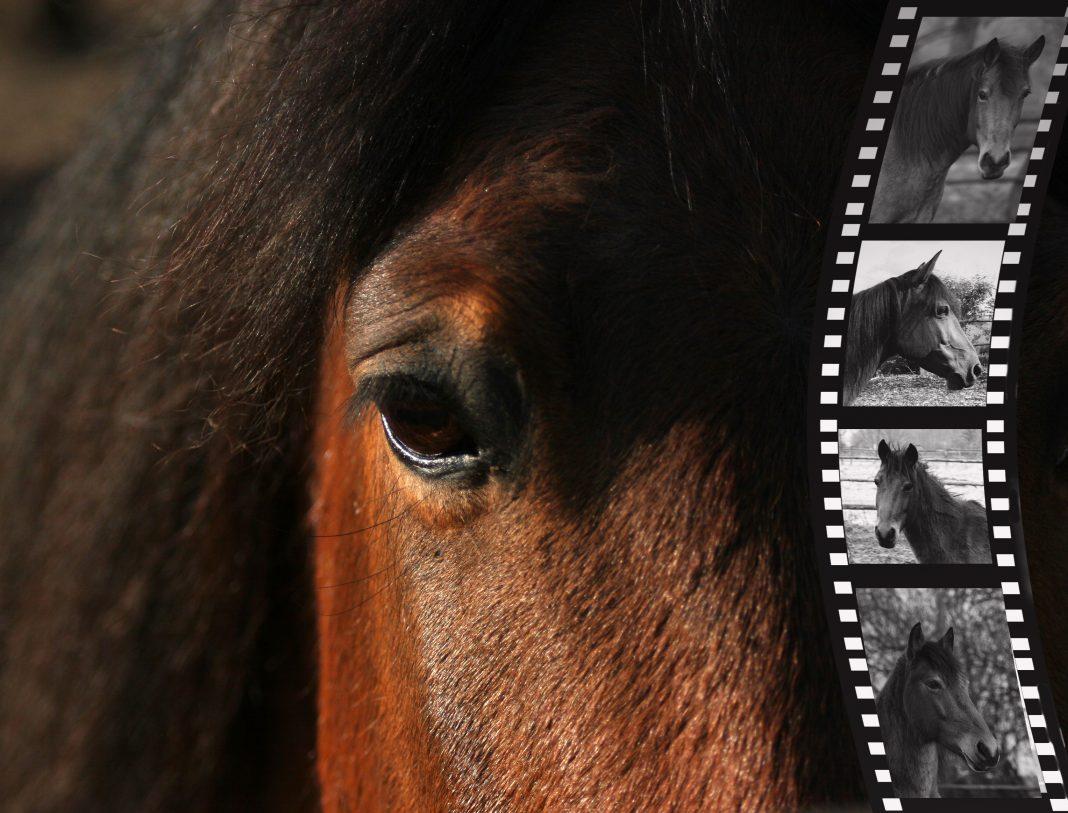 die 10 schönsten Pferdefilme