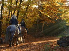 Reiten im Herbst: Reiter reiten mit Pferd durch den Wald im Herbst